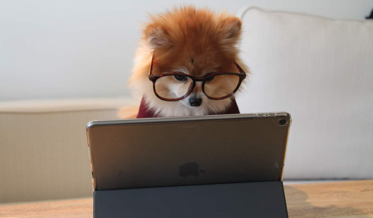 dog with glasses at iPad